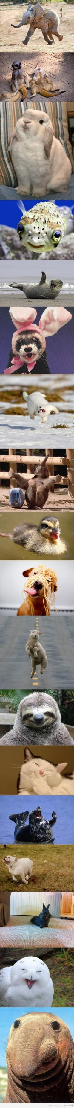 I am a sucker for cute animal pictures = ]: Funny Animals, Happy Animals, So Happy, Funnies, Smile, Happiest Animals