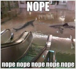 I can't think of a better definition for Nope.: Real Life, Nope Nope, That S Scary, A Sharknado, Sharks, Tanks, Worst Nightmare