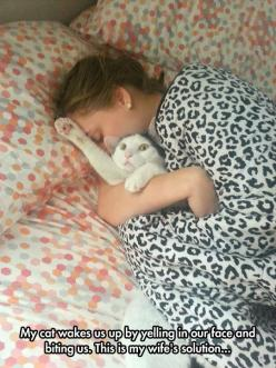 I do the same thing to my cats!: Food Funny, Cats Fun More, Cats Hahahaha, Cat Love, Cat Faces, Baby Cats, Animal, Cat Lady