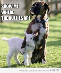 I know there are some breeds of dogs who will stand guard over goats and protect them from predators. Awesome! So what is the answer to bullying? Do schools have to hire huge, muscular guys to hang around and protect those who are picked on? It sounds lik