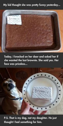 I laughed so hard: Giggle, Dogs, Funny Pictures, Brownie, Funny Stuff, Funnies, Humor