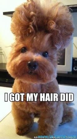I look fabulous! @Natasha Witala: Animals, Dogs, Hairs, Puppy, Funnies, So Funny