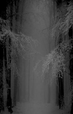 I love how it seems like something could walk out of that fog at any moment...: Mystical Snow, Forests, Nature, Winter Wonderland, Trees, Snow Forest, Places, Photo