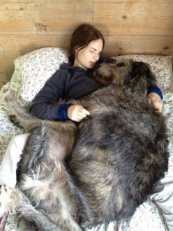 I love my mom! Irish Wolf Hound: Animals, Irish Wolfhounds, Pet, Irishwolfhound, Big Dogs, Bigdog, Friend