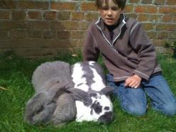 I need one, giant Flemish: Giant Rabbit, Big Bun, Dog, Flemish Giant