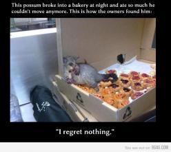 I wouldn't regret a thing either, buddy.  ...lol too funny!: Giggle, Funny Stuff, Regret, Funnies, So Funny, Animal, Awesome Possum