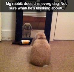 Introspective bunny // funny pictures - funny photos - funny images - funny pics - funny quotes - #lol #humor #funnypictures: Rabbit, Awwwwe 3, Funny Bunnies, Beer Bottle, Introspective Bunny, Animal