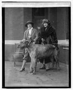 Irish Wolfhound with Chihuahua on back: Dogs, Irishwolfhounds, Irish Wolfhounds, Vintage Dog, Chihuahua, Dog Show, Photo, Friend