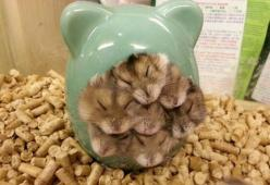 it's a hamster-palooza!: Funny Animals, Cuteness, Adorable Animals, Stuff, Pets, Hamsters, Box, Things, Smile