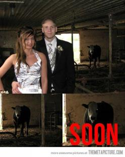 It really begs the question, why are they taking a prom picture in a barn?: Demon Cow, Animals, Funny Pictures, Funny Stuff, Children, Even, Funnies, Scary Cow