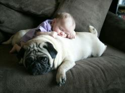 Kids and Their Pets  @Megan Pargeter: Babies, Animals, Sweet, Dogs, Pets, Pugs, Photo, Kid