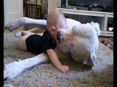 Kindness of a pitt-bull with baby