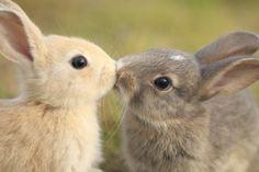 Kissing bunnies!
