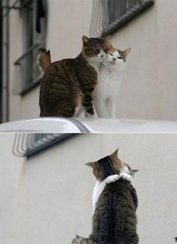 kitties in love: Cats, Kitty Cat, Kitten, Animals, Sweet, Hug, Pets, Cat Love, Things