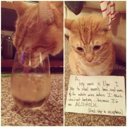 Lol!: Alcoholic Cat, Cats, Animals, Funny, Photo, Kitty