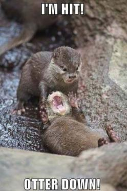 lol   ...........click here to find out more     http://googydog.com: Funny Animals, Giggle, I M Hit, Otters, Funny Stuff, Humor, Funnies, Things