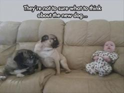LOL funny pics with quotes (06:45:48 PM, Thursday 30, April 2015 PDT) – 20 pics: Animals, Dogs, Funny Pictures, Funny Stuff, Pugs, Funnies, Funny Animal
