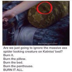 Lol haha funny pics / pictures / Katniss / Spiders / Bugs / Hunger Games Humor