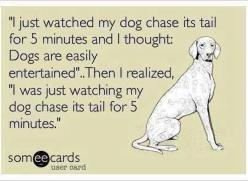 lol lol...so funny....and true.....'Obivously doggies and humans are a perfect match for each other in the most humble of ways. We don't really need much more to be truly happy! :-): Easily Entertained, Dogs, Quotes, Funny Stuff, Funnies, Humor, A