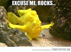 Lol. The humor grows when you look at it for awhile...: Animals, Excuse Me, Fish, Funny Stuff, Funnies, Humor, Funny Animal, Rocks