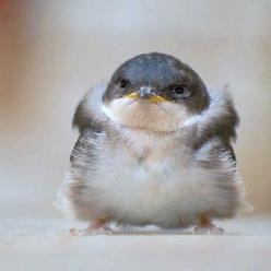 looks like another baby bird: Funny Animals, Cuteness, Funny Stuff, Funnies, Adorable, Baby, Things, Angry Birds