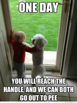 Love this! Addie already knows how to open the door to let the dogs in or out! I always have to keep it locked!: One Day, Animals, Oneday, Dogs, Funny Stuff, Funnies, Humor, Friend