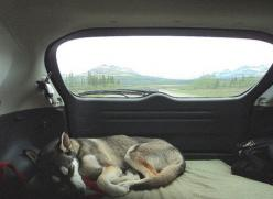 Love this pic. It has the whole on the road, traveling feel, with a gorgeous background: Animals, Adventure, Dogs, Pet, Road Trips, Puppy, Travel, Photo, Roadtrip