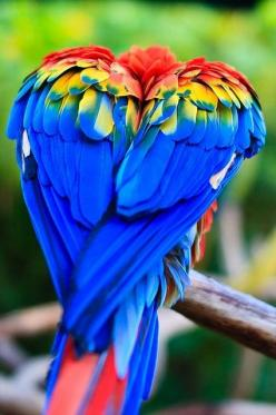 Macaw...I will start another rescue within five years for unwanted parrots: Colour, Animals, Heart, Nature, Color, Parrots, Birds
