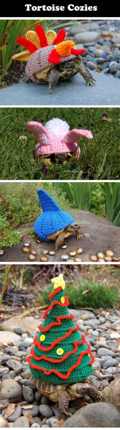 Magnificent tortoise cozies…I don't know which one I love more.: Pet Turtle, Magnificent Tortoise, Funny Turtles, Tortoise Cozies, Funny Stuff, Tortoise Stuff, Tortoises, Pet Tortoise, Animal