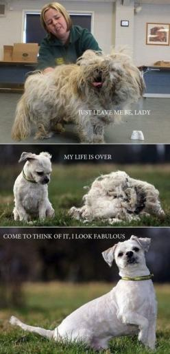 make me laugh: Funny Animals, Dogs, Funny Pictures, Pet, Hair Cut, Dog Grooming, Puppy, Haircut