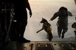 Military dogs = no fear: Military Dogs, Animals, Hero, Special Forces, Working Dogs, Friend, War Dogs