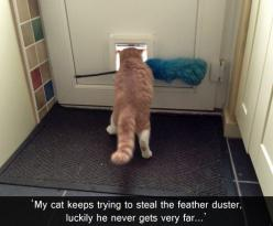 My cat keeps trying to steal the feather duster.  Luckily he doesn't get very far.  (tumblr.tastefullyoffensive.com): Animals, Funny Cats, Crazy Cat, Funnies, Funny Animal, Kitty, Silly Cat