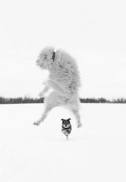 Oh no! If I jump high enough, maybe he'll think I'm a snowflake!: Photos, Animals, Dogs, Pet, Dog Photography, Dog Jump, Sarahbourque