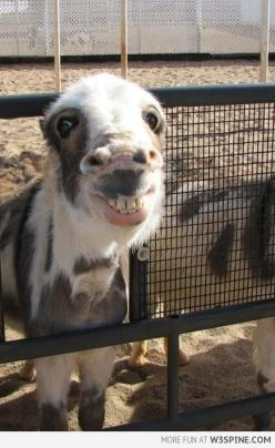 Omg.. I just died.: Face, Animals, Horses, Donkeys, Funnies, Funny Animal, Things, Smile