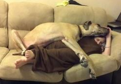 once upon a time, an adorable puppy named demon used to do this to me when i would crash on a friends couch. i enjoyed the cuddling.: Great Danes, Animals, Dogs, Pets, Funny, Blankets