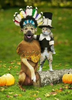 One of my favorite silly photos..I put this in my kids lunch boxes around Thanksgiving!: Cats, Animals, Happy Thanksgiving, Dogs, Pets, Funny, Holidays, Funnies, Happythanksgiving