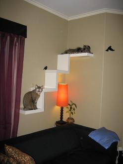Oooooh I like this! I'd put the stairs part on the side wall next to my bed. And the one long shelf about the head of my bed and have fabric drape from underneath: Cats, Cat Furniture, Cat Ideas, Cat Shelves, Pet, Cat Tree, Diy Cat, Cat Room