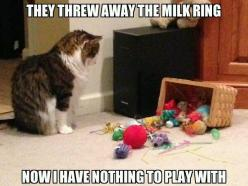 Or bottle cap, spare change, toilet paper, reading glasses, bobby pins. socks basically anything but their cat toys.: Cats, Animals, Milk Ring, Funny, Play, Crazy Cat, So True, Kitty, Cat Lady