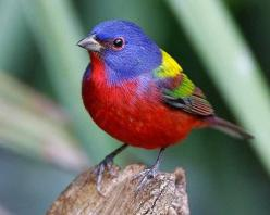 Painted Bunting: Colorful Birds, Animals, Nature, Buntings, Paintedbunting, Beautiful Birds