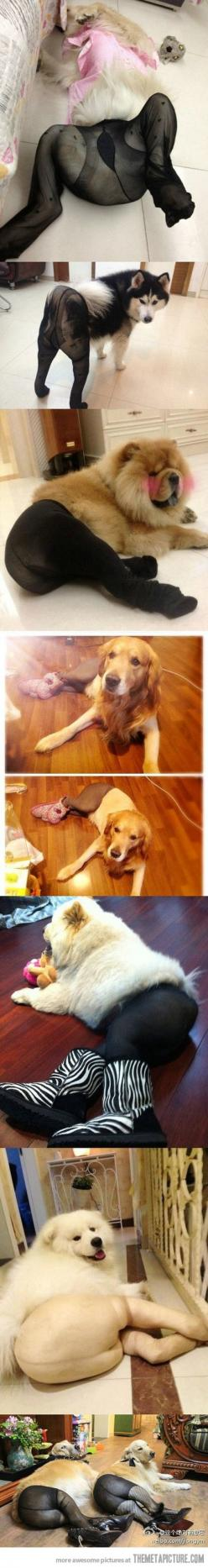 Pantyhose on dogs crack me up...: Giggle, Cant, Thought, Poor Dogs, So Funny, Animal