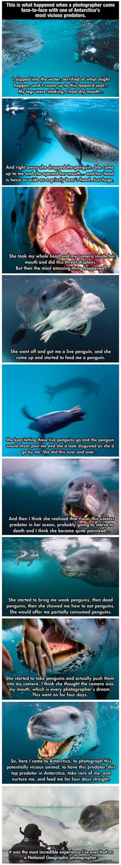 Photographer encounters vicious antarctic predator, who tries to teach him to be a better leopard seal so he'll survive in the wild: Geographic Photographer, Vicious Predator, Absolutely Amazing, Dream Job, Animal Stories