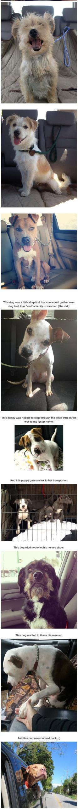 Photos of dogs taken after leaving the shelter and getting in the car.: Animal Rescue, Animal Shelters, Dogs In Shelters, Humor Funnypictures, Animals Dogs, Cars, Photo