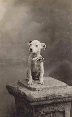Pictures were such an ordeal back then; His owner must of had a lot of pride and love for his dog to want him photographed! #adorable: Jack Russell, Anxious Puppy, Dog Photos, Vintage Photos, Animals Dogs, Puppys, Vintage Dog, Libby Hall