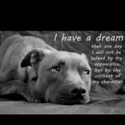 #pit bull: Animals, Dogs, Dreams, Quotes, Pet, So True