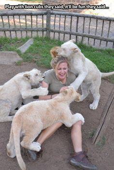 Playing with lion cubs...: Big Cats, Animals, Funny Pictures, They Said, Plays, Humor, Funny Animal, Lion Cubs, Photo