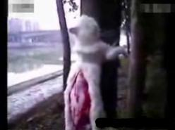 "PLEASE HELP STOP HORRIFYING ABUSE OF CATS IN CHINA! ""Stop The ""Cat Cutters"": DEMAND THE IMPLEMENTATION OF ANIMAL PROTECTION LAWS!  PLZ SIgn  Share!: Animal Petitions, Graphic, Animal Rights, Animal Cruelty, Animalabuse, Evil"
