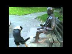 """Poor dog can't figure out why that """"man"""" won't play with him. The laughing in the background is contagious!"""