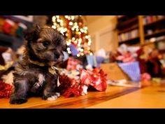 Puppy Christmas - a can't miss
