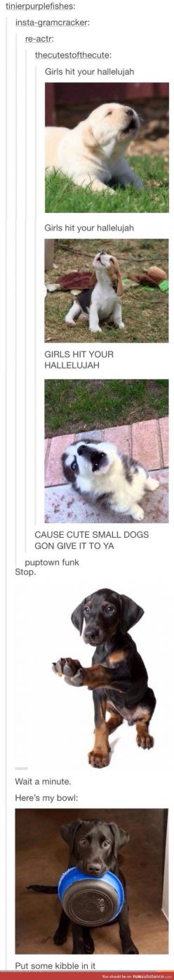 Puptown Funk. SATURDAY I BE IN THE KITCHEN, DONT LOOK AWAY JUST WATCH. (The dog is begging for food): Awe ? ? ? ?, Puptown Funk, Text Posts, Animal Humour, Tumblr Posts, Uptown Funk Funny, Funny Tumblr
