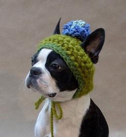 Really don't endorse dog clothes, but this is too sweet.: Hats, Animals, Dogs, Crochet, Pets, Boston Terriers